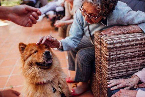 O convívio com os cães traz muito benefícios para os idosos. (Foto: Reprodução / Facebook Cora Residencial Senior)