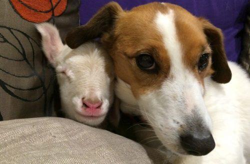 Mel também passou a ficar juntinho de Kenny. (Foto: Reprodução / Gunyah Animal Healing Sanctuary)