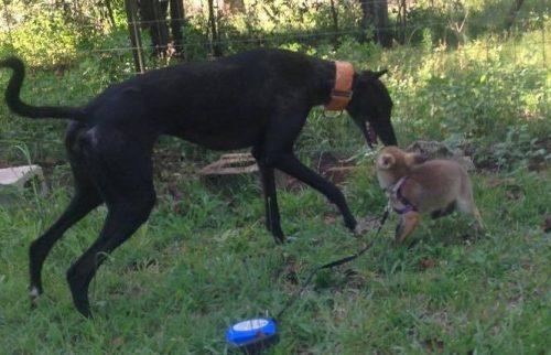 Brincar juntos é uma diversão. (Foto: Reprodução / Sugarshine Farm Sanctuary)