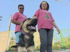O casal Marinalva e Sérgio alimentou e deu água para o cão durante todo o trajeto e ao final decidiu adotar o cachorrinho romeiro. (Foto: Reprodução / TV Vanguarda)