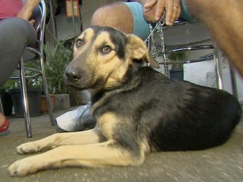 O cão, que vivia nas ruas, resolveu seguir um grupo de romeiros até Aparecida. (Foto: Reprodução / TV Vanguarda)