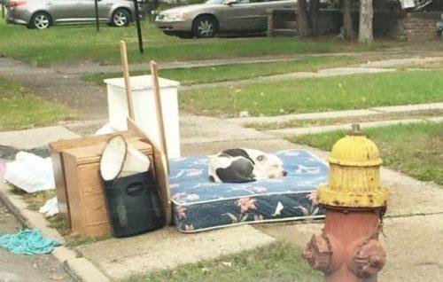 Boo foi deixado na calçada juntamente com o lixo que seus tutores não queriam mais quando se mudaram. (Foto: Reprodução / Detroit Youth and Dog Rescue)