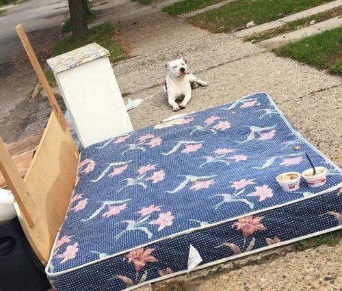 O cão ficou esperando no mesmo local por mais de um mês. (Foto: Reprodução / Detroit Youth and Dog Rescue)
