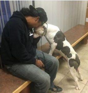Após o resgate foi possível perceber o quanto Boo continuava sendo um cão amoroso e gentil. (Foto: Reprodução / Detroit Youth and Dog Rescue)