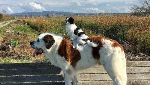 Os cães se conheceram quando Lulu ainda era uma filhote. (Foto: Reprodução / David Mazzarella)