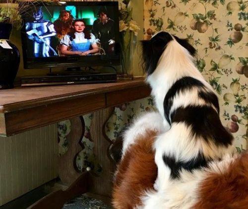 O local especial também é o escolhido quando Lulu quer assistir televisão. (Foto: Reprodução / David Mazzarella)