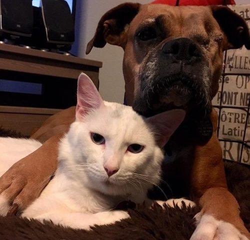 Os animais se conheceram em um lar temporário. (Foto: Reprodução / Kickie D'Alfonso)