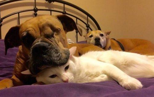 O gatinho e a cadela acabaram se tornando melhores amigos. (Foto: Reprodução / Kickie D'Alfonso)
