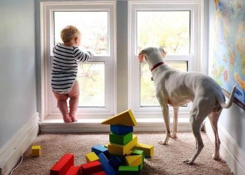 A cachorrinha Nora tinha medo de quase tudo, menos de seu irmãozinho humano. (Foto: Reprodução / Elizabeth Spence)