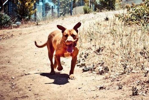 Os voluntários que ajudam Rayne seguem esperançosos de que a cadela ainda terá o seu final feliz. (Foto: Reprodução / The Barking Lot)