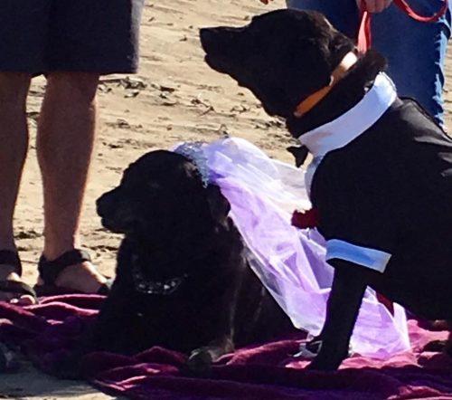 A primeira coisa feita após a triste notícia foi o casamento de Wellington e sua melhor amiga Elsa.(Foto: Reprodução / Amy Loveless)