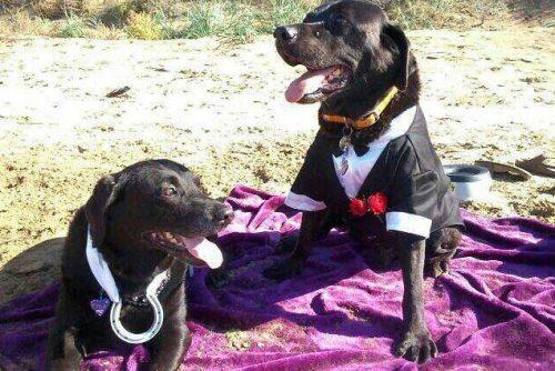 Agora, enquanto segue em tratamento, o cão recebe visitas mais frequentes de sua esposa para (Foto: Reprodução / Amy Loveless)