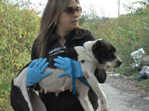 Judy logo percebeu que a cadela era uma mamãe que teve filhotes recentemente.(Foto: Reprodução / The Abandoned Ones)