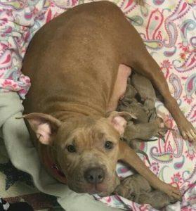 Pocahontas teve seus bebês assim que foi resgatada. (Foto: Reprodução / Rescue Dogs Rock NYC)