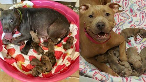 Mamães e filhotes estão muito bem e nunca mais precisarão voltar para o porão onde viviam. (Foto: Reprodução / Rescue Dogs Rock NYC)