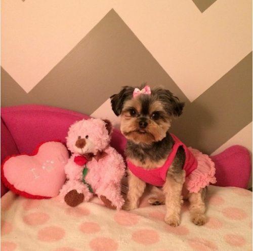A cadelinha Mia ganhou um quarto só para ela. (Foto: Reprodução / Instagram mia_lambeau)