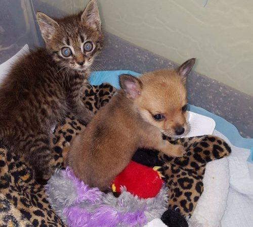 Os animais se deram muito bem desde que foram colocados juntos. (Foto: Reprodução / Shenandoah Valley Animal Services Center)