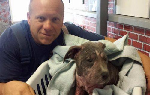 O bombeiro Mike encontrou a cadelinha na chuva sozinha em uma estrada e imediatamente levou-a para a estação para secá-la. (Foto: Reprodução / Sacramento Fire Department)