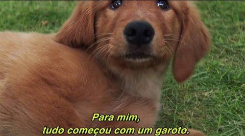 """O filme """"Quatro Vidas de um Cão"""" conta a história do cãozinho Bailey. (Foto: Reprodução / Divulgação)"""