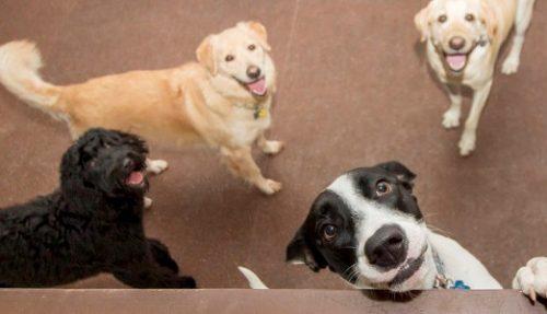 O lado social também estará presente e a Mundo Pet contará com centro de adoção. (Foto: Reprodução)