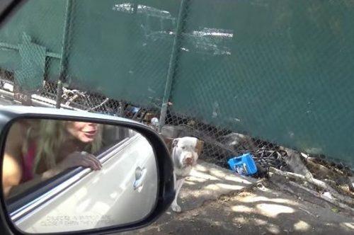 Ao saber sobre o cão Brutos, uma equipe da Hope for Paws rapidamente foi resgatá-lo. (Foto: Reprodução / Hope for Paws)