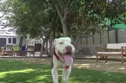 Brutos é um cão muito doce, amoroso e faz de tudo para agradar. Ele está em um lar temporário enquanto aguarda ser adotado. (Foto: Reprodução / Hope for Paws)