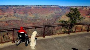 Nora passou seu último ano de vida viajando com seu cão Ringo. (Foto: Reprodução / Facebook Driving Miss Norma)