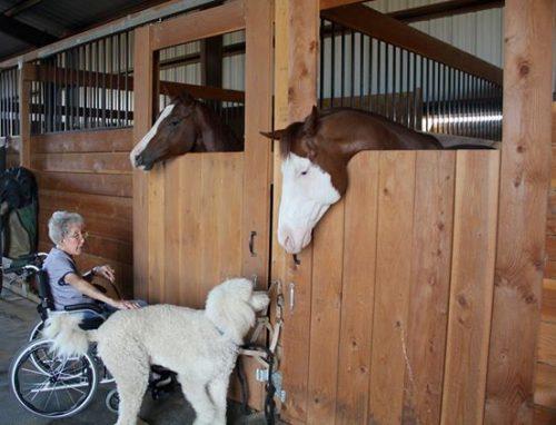 Juntos, eles conheceram vários lugares e fizeram novos amigos. (Foto: Reprodução / Facebook Driving Miss Norma)