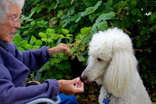 Durante a viagem, Ringo comemorou 9 anos de idade colhendo e comendo amoras com sua amada tutora. (Foto: Reprodução / Facebook Driving Miss Norma)