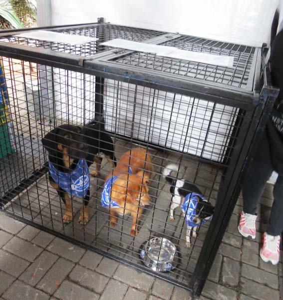 Cães aguardando pela adoção. (Foto: Reprodução / franciscanos.org.br)