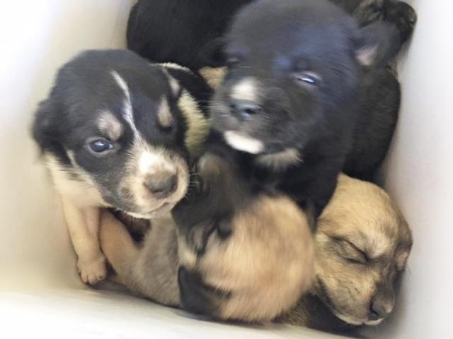 Eles estavam amontoados dentro da pequena caixa. (Foto: Reprodução / The Dodo / Hunt County Pets Alive)