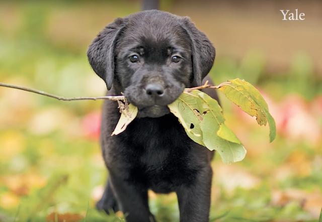 A inteligência canina sempre nos surpreende! (Foto: Reprodução / Youtube / YaleCampus)