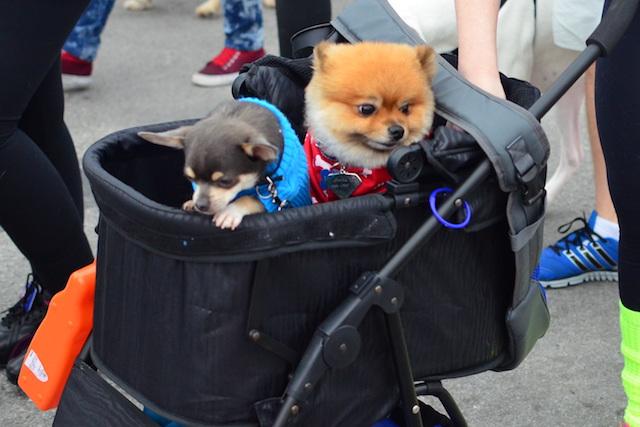 Cachorros e crianças têm muitas coisas em comum! (Foto: Karina Sakita)