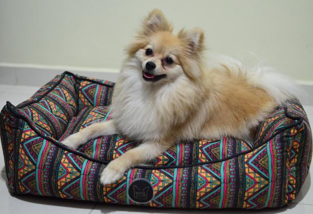 Seu cão vai adorar essa caminha! (Foto: Karina Sakita)