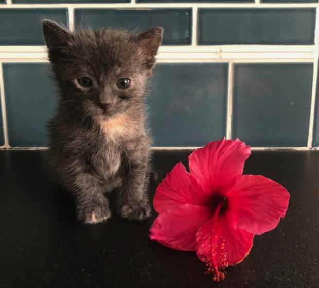 A gatinha Rosita foi acolhida por Julie e seus quatro chihuahuas. (Foto: Reprodução / Julie Docherty / The Dodo)