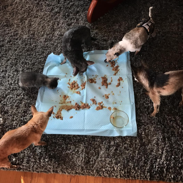 Comendo juntos. (Foto: Reprodução / Instagram / @jemandthemisfits)