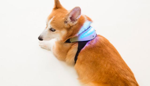 A luz varia de acordo com o que o cachorro está sentindo. (Foto: Reprodução / Inupathy)