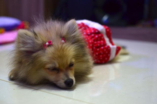 Será que seu cachorro está sonhando com você? (Foto ilustrativa: Karina Sakita)