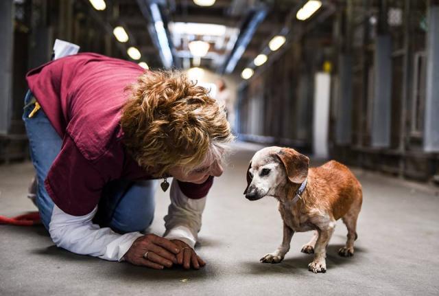 Elaine Seamans com a dachshund Muneca, no Baldwin Park Shelter. (Foto: Reprodução / John Hwang)
