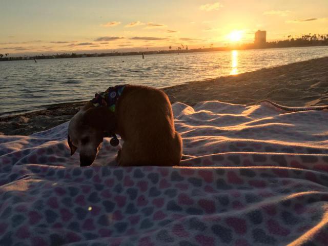 A visita à praia. (Foto: Reprodução / Facebook / Frosted Faces Foundation)