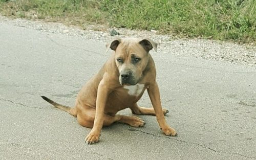 A cadela não conseguia mover as patas traseiras e tinha vários ossos quebrados. (Foto: Reprodução / The Abandoned Ones)