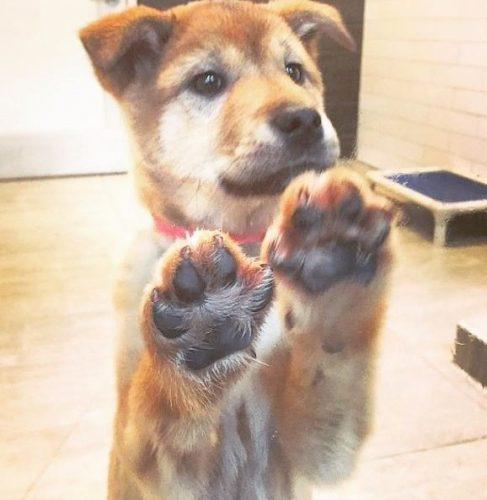 Ao chegar na SPCA de São Francisco, a cadelinha logo foi adotada. (Foto: Reprodução / Instagram Sunshine My Life In The Sunshine)