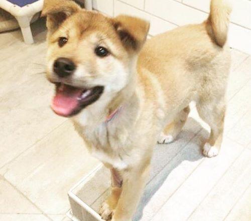 Sunshine se transformou em um cão muito feliz e levou bastante alegria para a sua nova casa. (Foto: Reprodução / Instagram Sunshine My Life In The Sunshine)