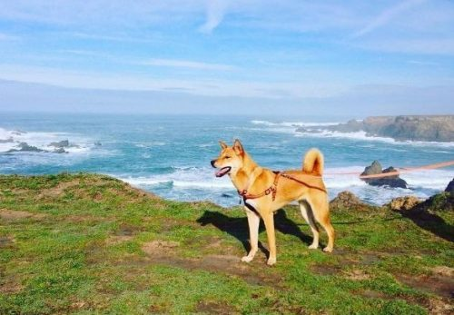 No novo lar, Sunshine finalmente teve a vida que todo cão merece. (Foto: Reprodução / Instagram Sunshine My Life In The Sunshine)