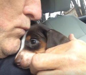 Todo o amor que recebeu de seu tutor foi essencial para a recuperação do cão. (Foto: Reprodução / Facebook e Instagram Here Comes Meatball)