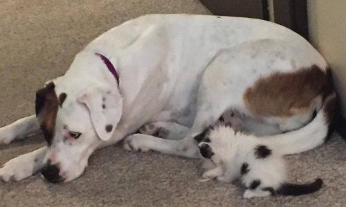 Opal passou a se sentir a mãe de Roxxy e não deixava a gatinha sozinha em nenhum momento.(Foto: Reprodução / Macy Thorne)
