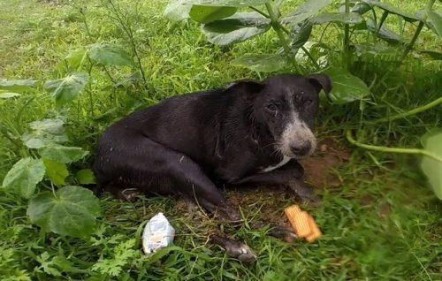 a cadela estava na rua sozinha, na chuva e no frio sem conseguir se mover. (Foto: Reprodução / Youtube Animal Aid Unlimited, India)