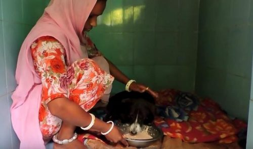 Um dia após a cirurgia a cadela estava bem melhor e já conseguia se sentar e comer. (Foto: Reprodução / Youtube Animal Aid Unlimited, India)