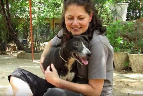 Hoje, Millie está totalmente curada e muito feliz. (Foto: Reprodução / Youtube Animal Aid Unlimited, India)