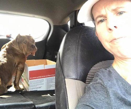 Felizmente, Carrie resolveu ajudar a a família canina após conhecer a história de Pepper pela internet. (Foto: Reprodução / Carrie DeBord)